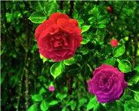 Цветочки-c3